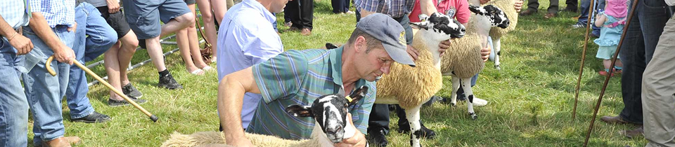 Judging at Penrith Show